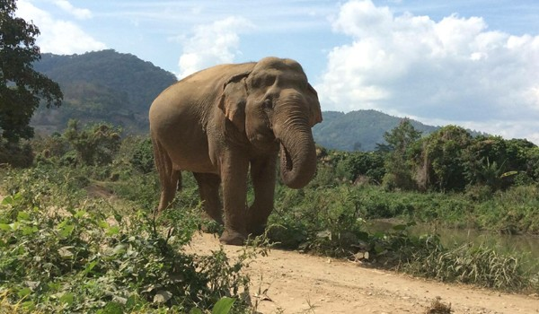 Jaemsai enjoy her freedom at Pamper A Pachyderm program by ENP.