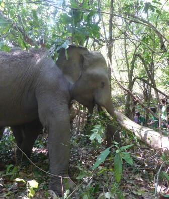 Volunteer at Journey to Freedom observe the elephants living their life in the natural terrain.