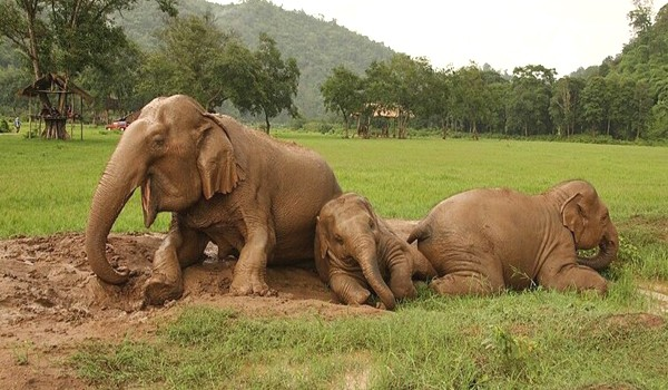 Visit our elephant family to learn elephant life with Single day visit program.