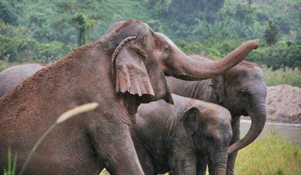 Brighten Up The Day With Elephants Trumpet When You  Stay Overnight At Elephant Nature Park
