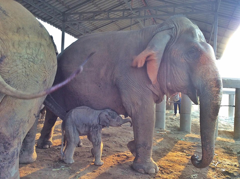 Welcome the newborn elephant to ENP.