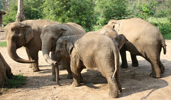 Volunteering At Elephant Nature Park Is A Life Changing Experience