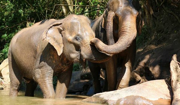 Elephants are happy to live with freedom and they are having afternoon chat.