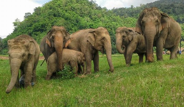 Freedom of life at Elephant Nature Park