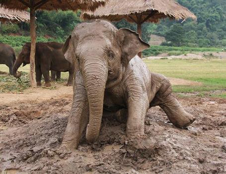 Faa Mai enjoy mud bath.