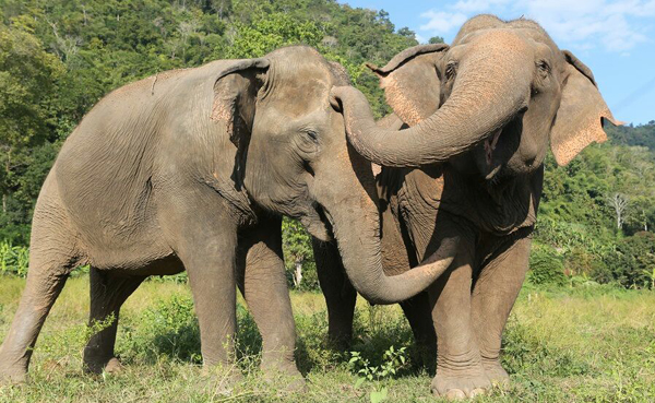 Jokia Was Very Happy To Stay Beside Mae Perm At Elephant Nature Park.