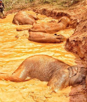 Elephant family take a bath in the hot afternoon.