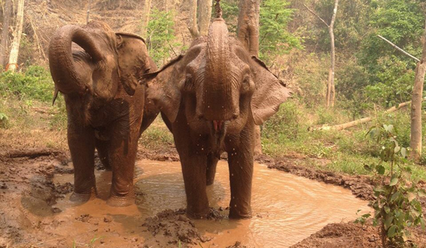 Spend The Day With Elephants At Sunshine For Elephants Program Will Be The Most Wonderful Experience