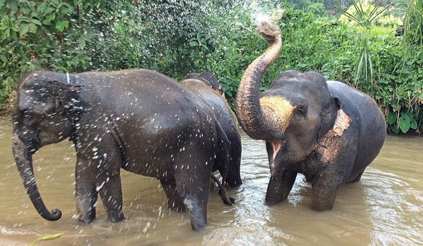 Refreshing in the river is a great time for elephants.