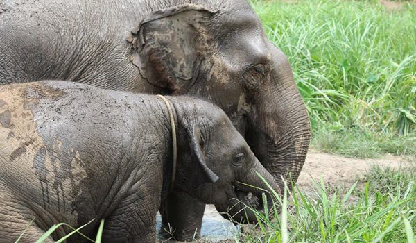 Baby and mother elephant have a great time at Hope for Elephant program