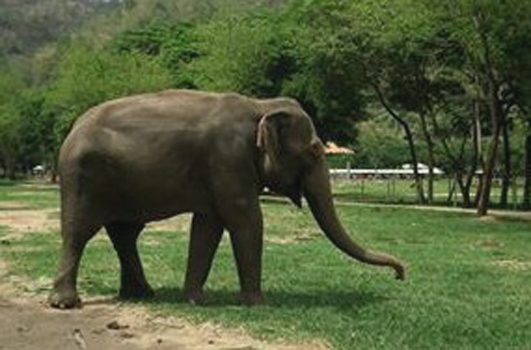 Jaidee is the most generous elephant