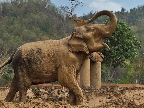 Saza loves to splash the mud to cover her body