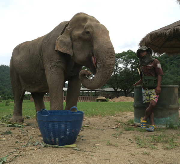 Elephant Of The Week: Ma Dee Our Recently Rescue Elephant