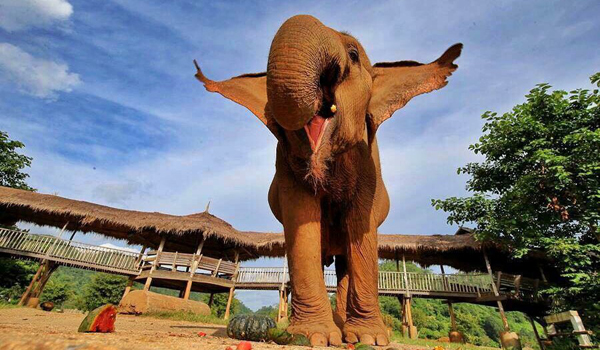 Elephant Of The Week : Medo's Rescue Anniversary