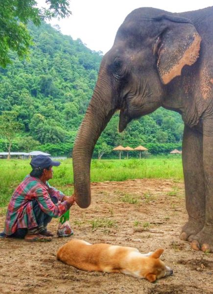 Jan Peng always follow by her mahout, Patee never far away from her