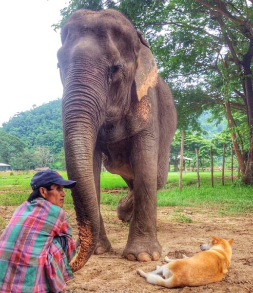 Jan Peng loves her mahout and doggy friend