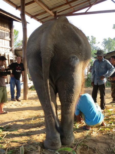 Saree before rescued