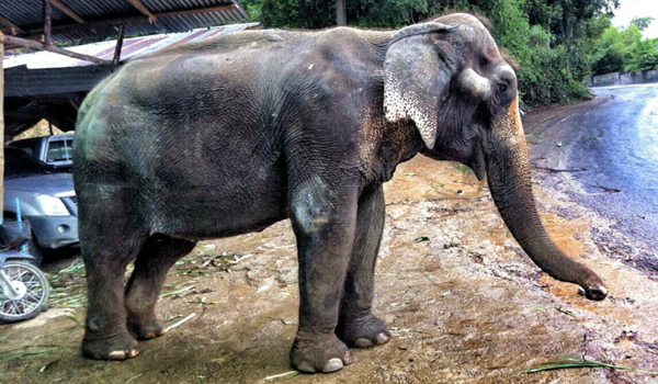 Tubtim Was In A Poor Condition Before Rescued To ENP