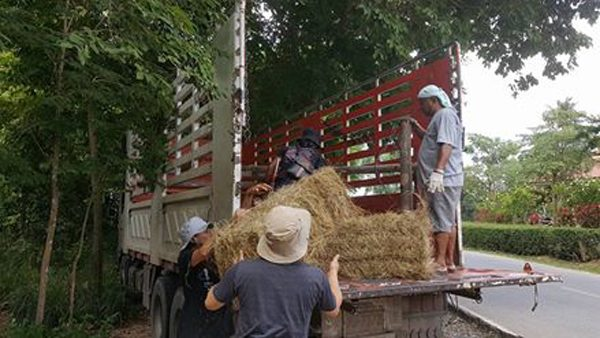 ENP team prepare the truck to get ready to transport Bai Cha to the park