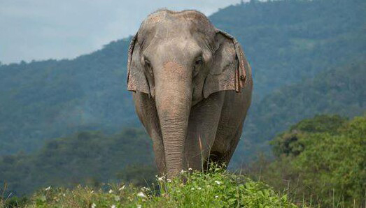 Elephant Of The Week : Kham Moon