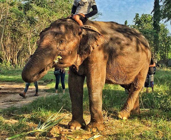 Sook Jai was in poor condition before she was rescued to Elephant Nature Park
