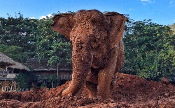 Sook Jai enjoy her mud bath