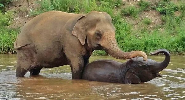 Bua Kham and Navann relaxing in the river