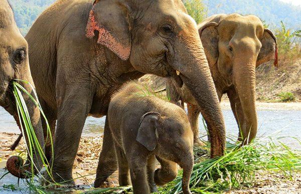 Malai Thong join nanny team of baby Yindee