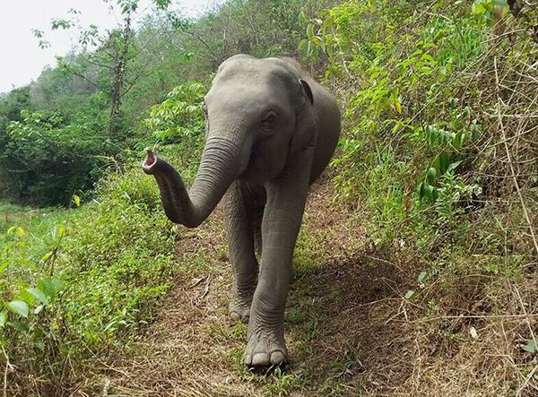The elephant love the sense of freedom