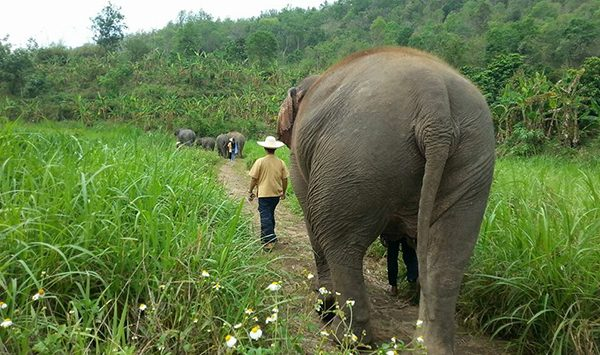 Elephants and ENP staff walking into the beautiful scenery