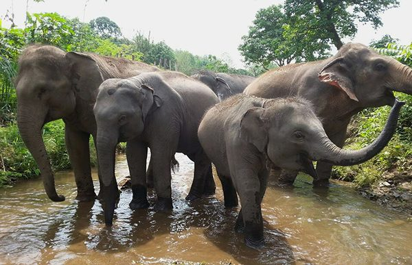Elephant family is celebrating their new life