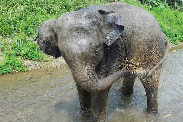 The Baby Elephant Having A Great Moment In The River