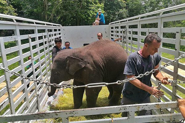 Dok Geaw was ready to move to Elephant Nature Park