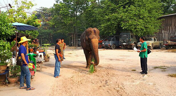 Bua Keaw Is Ready To Take Her Journey To The New Home