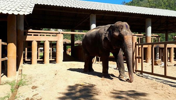 Bua Keaw walk around her shelter to explore the new environment.