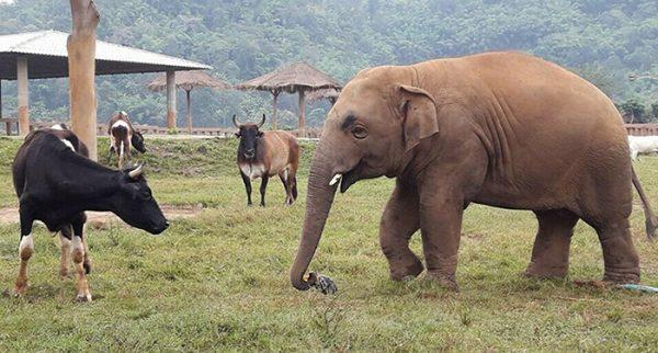 Navann makes friends with everyone.