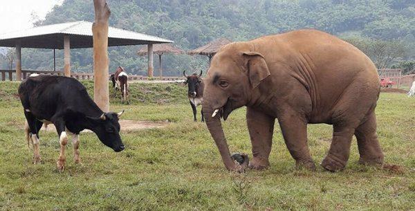 Navann is the happiest baby elephant.