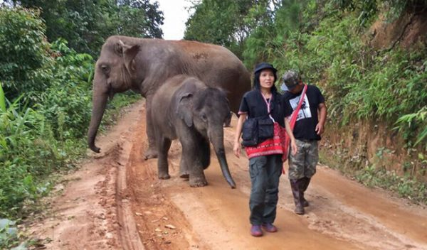 Lek walked Zuki and his mother to live free at Journey to Freedom project on July 2016.