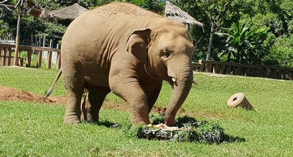 Navann does not hesitate to taste his birthday cake.