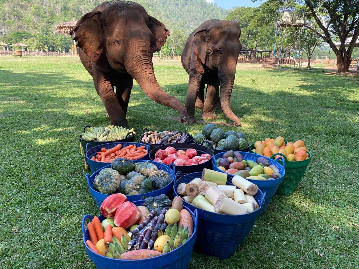 Elephant's Fruits Bucket