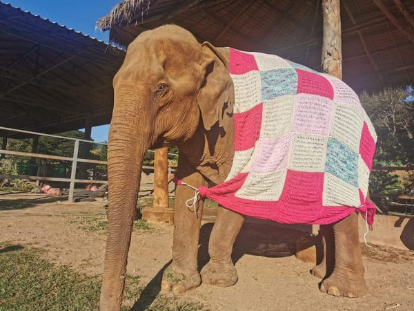We provided Bai Cha the blanket to keep her warm when the temperature drop down.