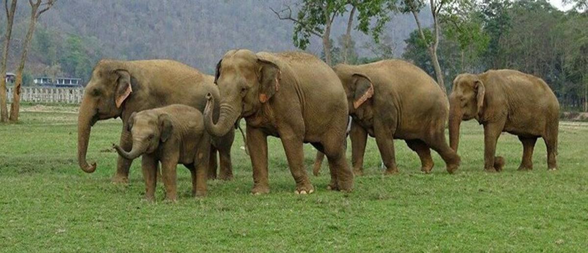 Welcome to Elephant Nature Park - Elephant Nature Park